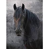 Suchergebnis Auf Amazonde Für Friesenpferde Bilder