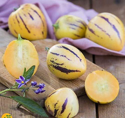 Soteer Garten - 100 Stück exotische Melonenbirne Samen Mini Zuckermelone GVO-Bio-Obst Früchte Samen Haus Bonsai Pflanze für Garten Balkon/Terrasse -