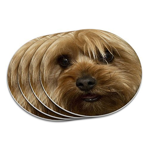 Yorkshire Terrier Yorkie Dog Coaster Set by Graphics and (Yorkshire Terrier Coaster)