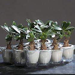 Pachira (Glückskastanie) im weißen Keramiktopf 22 cm Kunstpflanze von DPI