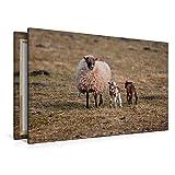 Premium Textil-Leinwand 120 x 80 cm Quer-Format Schafe und Lämmer   Wandbild, HD-Bild auf Keilrahmen, Fertigbild auf hochwertigem Vlies, Leinwanddruck von Hermann Greiling