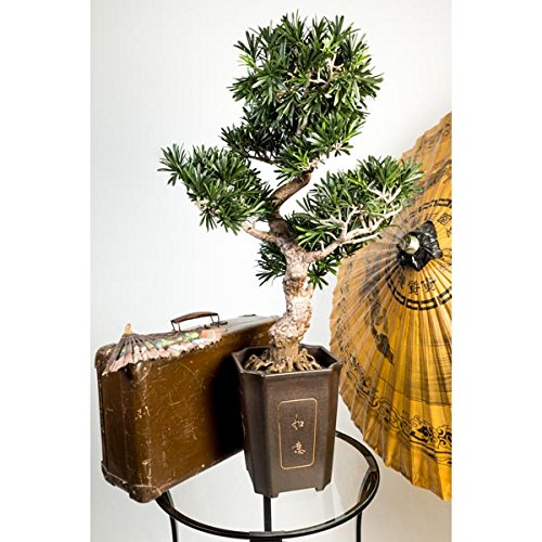 artplants – Künstlicher Bonsai Podocarpus im Topf, 320 Blätter, 90 cm, wetterfest – hochwertiger Kunstbonsai/Unechtes Bonsai Bäumchen