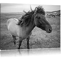cavalli islandesi selvatica, formato: 120x80 su tela, XXL enormi immagini completamente Pagina con la barella, stampa d'arte sul murale con telaio, più economico di pittura o un dipinto a olio, non un manifesto o un banner,