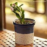 ExclusiveLane Dual Glazed Studio Pottery Garden & Balcony Planter Pot In Ceramic - Plant Containers Ceramic Pots Flower Pots For Garden Planter Box Ceramic Planter Living Room Decorative Flower Bowl Outdoor Living - B07DDKKCYR