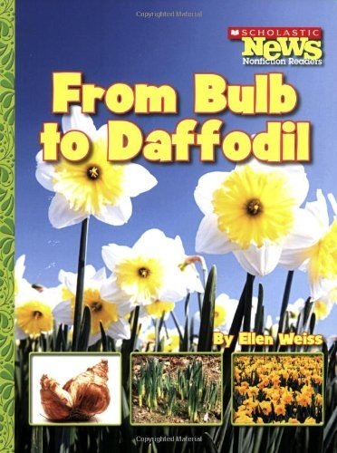 From Bulb to Daffodil (Scholastic News Nonfiction Readers) by Assistant Professor School of Architecture Ellen Weiss (2007-09-01)