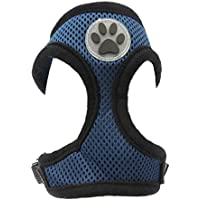 Adorabile Tea Cup//peluche piccolo cane razze imbracatura imbottita colorata in nylon regolabile con decoro nero Paw Print–disponibile in 6colori e 5misure