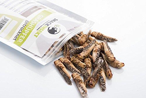 SnackInsekt Grashüpfer, gefriergetrocknet 20 g | zum Snacken und Verfeinern | in Europa gezüchtet und untersucht | für den menschlichen Verzehr | Knabberspaß - wenig Kalorien -