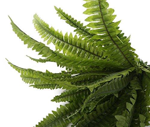 Closer To Nature 30cm Boston Farn Plug Betten Pflanze - 4