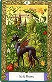 Image de Mystisches Kipper: Set mit 36 Kipper- Wahrsagekarten und Buch