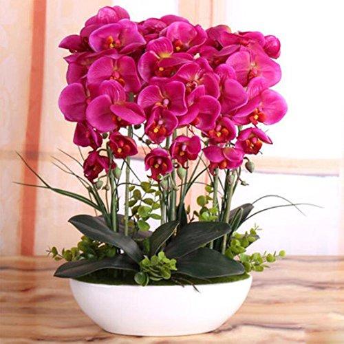 phalaenopsis-simulacion-flores-6-horquilla-como-en-la-foto-1