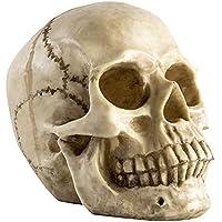 Halloween Deko Totenschädel Totenkopf Lebensgroß Menschlichen Schädel Figur Modell für Anatomischen