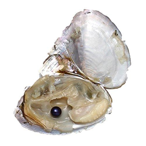 Perle Oyster, Round Pearl Beads 7–8mm, ostriche con perla all' interno, black