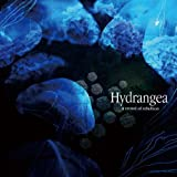 Songtexte von a crowd of rebellion - Hydrangea
