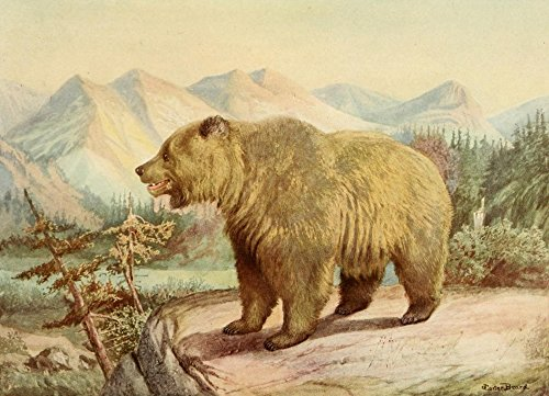 The Poster Corp J. Carter-Beard - American Natural History 1914 Alaskan Brown Bear Kunstdruck (45,72 x 60,96 cm)