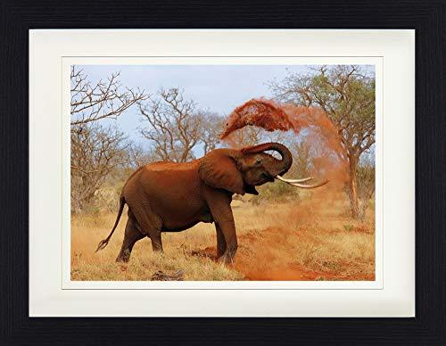 1art1 114139 Elefanten - Afrikanischer Elefant Nimmt Eine Sanddusche Gerahmtes Poster Für Fans Und Sammler 40 x 30 cm -