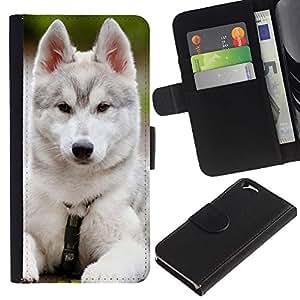 Schutz Etui Leder Brieftasche Hülle und Kreditkarte-Schlitz Tasche Kartenhalter für Apple Iphone 6 4.7 Siberian Husky Malamute White Puppy Dog / JUSTGO PHONE PROTECTOR
