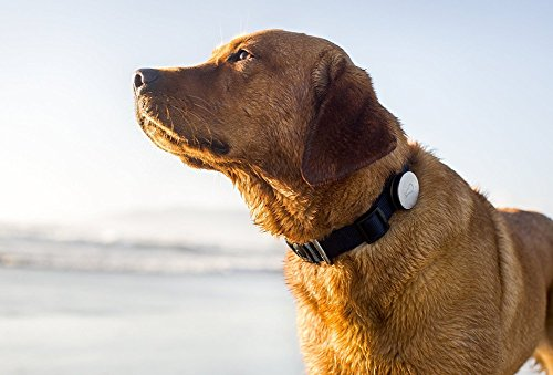 Whistle Activity Monitor For Dogs by Whistle 3