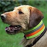 Premium Warnhalsung reflektierend, 3-Farbiges Halsband, Größen Halsband reflektierend:35 cm Halsumfang