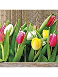 Abbott Collection 20Stück große bunte Tulpen Servietten
