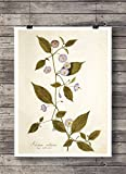 Print Wandbild Poster Bild Pflanze Nr.4 Blume antik Vintage OHNE RAHMEN Format A4
