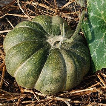 VISA STORE Seeds - Muscat De Provence Seeds