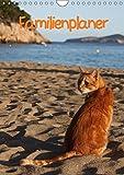 Familienplaner Katzen (Wandkalender 2018 DIN A4 hoch): Stubentiger und Streuner (Familienplaner, 14 Seiten ) (CALVENDO Tiere) [Kalender] [Apr 01, 2017] Lindert-Rottke, Antje