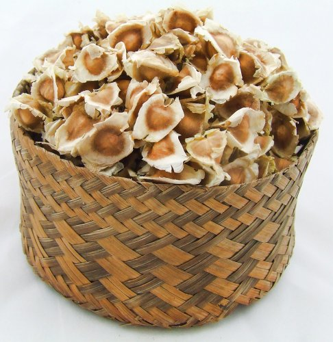 1000 Moringa Oleifera Quality Seeds