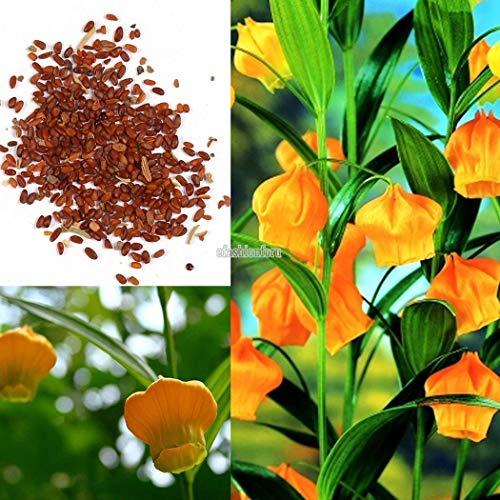 150 Graines Johnsons graines-paquet pictural-Fleur-Tagetes Golden gem