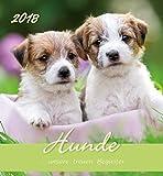 Hunde 2018 - Dogs - Postkartenkalender (15 x 16)
