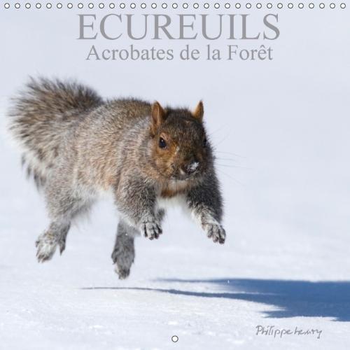 Ecureuils. Acrobates De La Foret 2018: Les Ecureuils Du Quebec Au Fil Des Quatre Saisons.