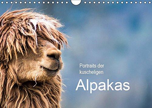 Portraits der kuscheligen Alpakas (Wandkalender 2019 DIN A4 quer): Liebevoll zusammengestellter Kalender mit hübschen Alpaka-Portraits. (Geburtstagskalender, 14 Seiten ) (CALVENDO Tiere)