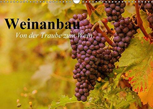 Weinanbau. Von der Traube zum Wein (Wandkalender 2018 DIN A3 quer): Schöne Impressionen vom interessanten Weinbau (Geburtstagskalender, 14 Seiten ) ... [Kalender] [Apr 01, 2017] Stanzer, Elisabeth