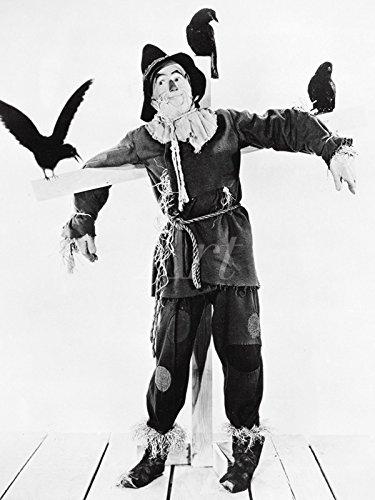 Artland Wandbild auf Alu-Verbundplatte Filmszene Der Zauberer von Oz, 1939 Film & TV Stars Fotografie (Kostüm Bilder Vogelscheuche)