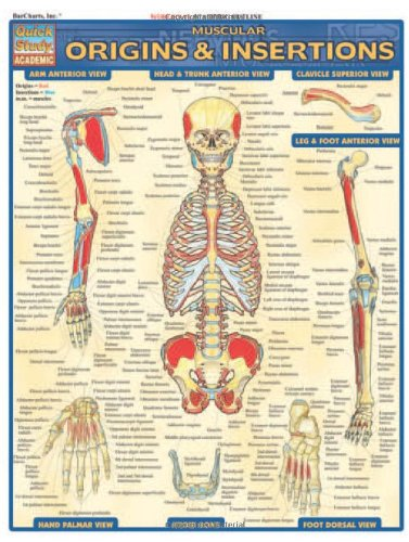 Muscle Origins and Insertions: Reference Guide (Quickstudy: Academic)