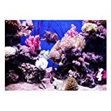 perfk Aquarium Hintergrund Rückwand Dekor - Korallen XL