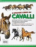 Image de Il grande libro dei cavalli