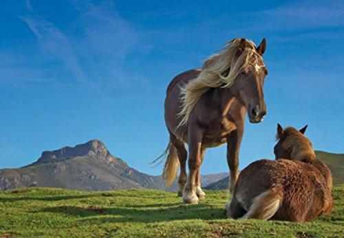 Chevaux-Papier-Peint-PhotoPoster-Ponies-Pottok-En-Libert-Au-Pays-Basque-3-Parties-360-x-250-cm