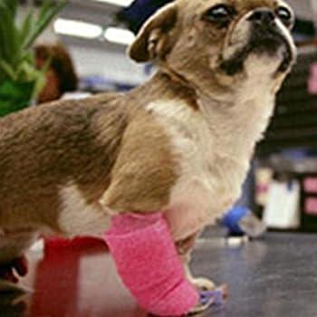 Hengsong Pourpre Elasticité Bandage Auto-adhésif Pets Chiens Chats Protection des Doigts