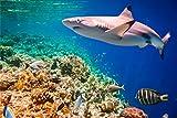 Hai Meer Fische Korallen XXL Wandbild Foto Poster P0165 Größe 90 cm x 60 cm, Größe 90 cm x 60 cm