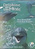 Delphine und Wale: Ihre Botschaft und Ihre Essenz