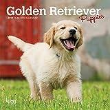 Golden Retriever Puppies 2019 Calendar