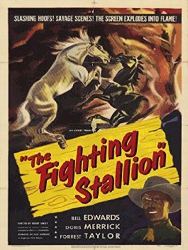 the-fighting-stallion