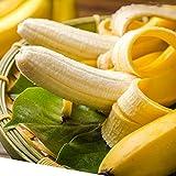 Yukio Samenhaus - Tropisch Bananensamen Bananenbaum Obstsamen Obstbananen Saatgut Keimfähig winterhart (100)