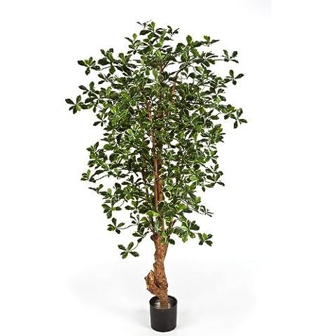 Decorativo ficus panda con 2106 hojas, verde-blanco, 150 cm - Árbol sintético / Planta artificial - artplants