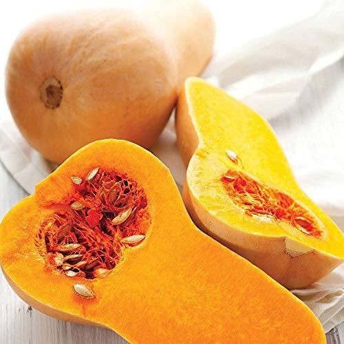 AGROBITS Real 5P Squash ernut Honeynut Moschus-Kürbis Gemüsesamen
