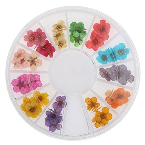 12-colores-3d-secan-clavo-de-la-flor-de-la-decoracion-de-la-rueda-de-manicura-del-arte-del-diseno-de