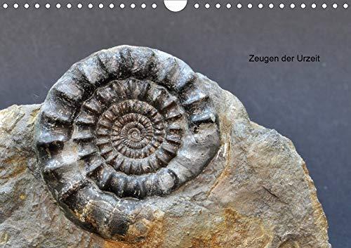 Fossilien - Zeugen der Urzeit (Wandkalender 2020 DIN A4 quer): Fossilien aus Westfalen und angrenzender Gebiete (Monatskalender, 14 Seiten ) (CALVENDO Wissenschaft)