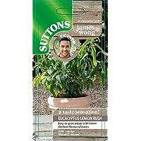Suttons Seeds Herb Eucalyptus Lemon Bush