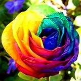 mymotto 100PCS Multi Colore giardino balcone Belle Bonsai Piante Rosa semi