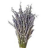 QUUY Bouquet de Lavande Sec Naturel de Fleurs séchées, Fleurs décoratives Bouquet pour la Fête de Mariage Accueil Décorations Saint-Valentin (1 Bundle Pack)